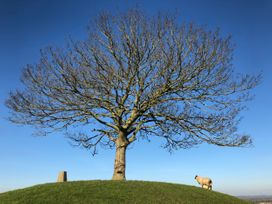 The Calf Barn - Somerset & Wiltshire - 1046659 - thumbnail photo 14