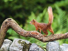 Bracken Beck - Lake District - 1053302 - thumbnail photo 17