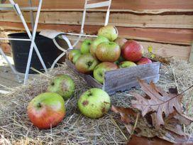 Bramley Orchard Glamping - Lincolnshire - 1062708 - thumbnail photo 20
