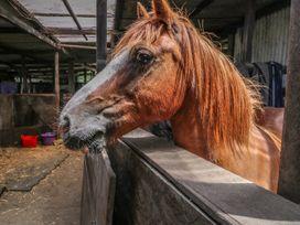 Hill Farm Cottage - Isle of Wight & Hampshire - 12722 - thumbnail photo 5