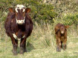 Homestone Farm - Scottish Highlands - 3729 - thumbnail photo 13