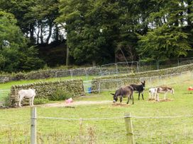 The Old Piggery - Yorkshire Dales - 916394 - thumbnail photo 17
