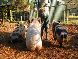 Bluebell Lodge - Cornwall - 962651 - thumbnail photo 13