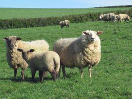 Haye Barton Farm - Cornwall - 976433 - thumbnail photo 19