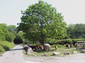 Haye Barton Farm - Cornwall - 976433 - thumbnail photo 20