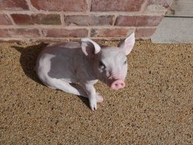 The Piggery - Herefordshire - 985932 - thumbnail photo 32