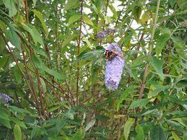 Lilliput - Dorset - 994340 - thumbnail photo 18